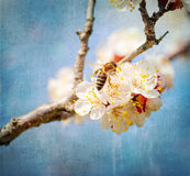 Old paper textured background, bee collects honey on a flower Royalty Free Stock Photos