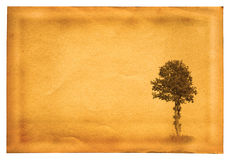 Old paper with tree Royalty Free Stock Images