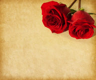 Old paper with two  dark red roses Stock Images