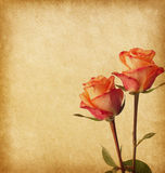 Old  paper with two roses. Old worn paper with two roses Royalty Free Stock Photography