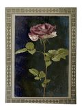 Old paper vintage card with beautiful pink rose Royalty Free Stock Photography