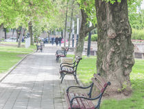 Old park bench in the city with green lawn Royalty Free Stock Photo