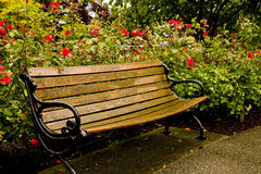 Old Park Bench in Rose Garden Stock Image