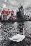 Old park and Castle Pottendorf in Austria with a white swan royalty free stock photography