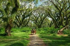The Old Park of De Djawatan royalty free stock photos
