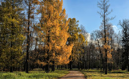 Old park on a sunny autumn day Royalty Free Stock Image