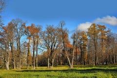 Old park on a sunny autumn day Royalty Free Stock Photos