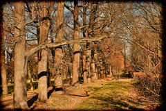 Old park on a sunny autumn day Royalty Free Stock Images