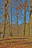 Old park on a sunny autumn day Stock Photos