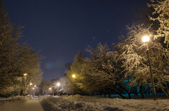 The old park in winter Royalty Free Stock Photography