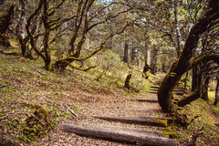 Old path. Alpine forest at an altitude of over 2,000 meters Stock Images