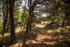 Old path through the coniferous forest to old abandoned fort of Sutomore village Stock Photo