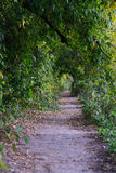 Old path in park Royalty Free Stock Image