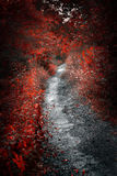 Old path in red forest royalty free stock photography