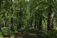 An old path in the trees. Alley. Royalty Free Stock Photos
