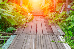 Old path wood bridge in deep forest crossing water with glowing light Stock Images