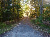 Old paved road in forest. With changing leaves and light and shadow Royalty Free Stock Image