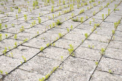 Old pavement grass Royalty Free Stock Photography