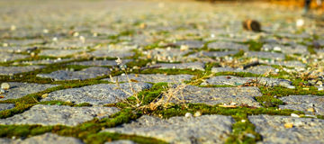 Old pavement with moss and grass Royalty Free Stock Photography
