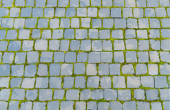 Old pavers with green grass Royalty Free Stock Photography