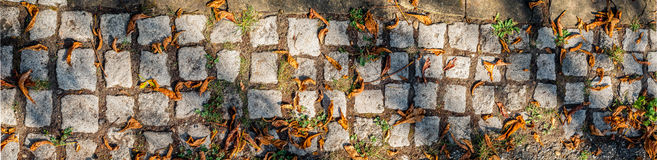 Old paving granite stones in park with chestnut leaves Royalty Free Stock Image