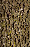Old pear tree bark texture with moss. Stock Photos