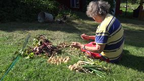 Old peasant woman sitting on grass process fresh onion heads. 4K stock footage