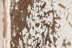 Old and peeled creaky paint , In course of time the white tone off the planks crackled, wood texture, background Royalty Free Stock Photo