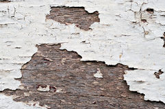 Old peeling paint on wood Royalty Free Stock Images