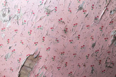 Old peeling pink wallpaper. With little red rose stock photos
