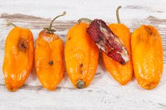 Old peppers with mold on old rustic background. Unhealthy and disgusting food concept. Old wrinkled peppers with mold on old rustic background. Concept of royalty free stock photos