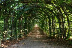 Old pergola on sunny day. Old overgrown with leaves pergola on sunny day stock images