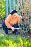 Old person gardening Stock Image