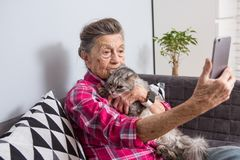 Old person usestechnology. Mature contented joy smile active gray hair Caucasian wrinkles woman sitting living room. Couch with fluffy cat using mobile phone stock photos