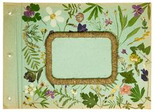 Old photo album, scrapbooking element. Page from an old photo album pistachio color. Scrapbooking element decorated with leaves, flowers and petals wildflowers royalty free stock photo