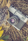 Old photo camera in a grass. Composition of lavender, sunflower and wheat Royalty Free Stock Image