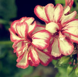 Old photo with floral texture 1 Royalty Free Stock Photos