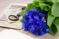 Old photos and corn flowers Royalty Free Stock Photos