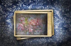 Old photos on  floral background Stock Photography