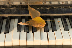 Old piano , autumn leaves on the keys, Stock Image