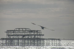 The old pier in Brighton at dusk. This image shows the remnants of the old pier in Brighton, England. The water looks silver in the sunshine; there`s a seagull Stock Images