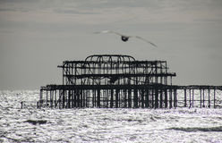 The old pier in Brighton and the seagull. Royalty Free Stock Photos