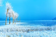Old pier construction and beautiful frozen trees. Old pier construction and beautiful frozen trees stock photos