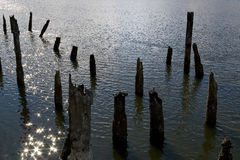 Old pier posts Royalty Free Stock Photo