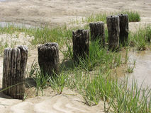 Old Pier Posts and Sand Royalty Free Stock Photos