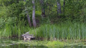 Old pier and river in summer. Old wooden pier of the boards on the river and water lilies and green grass in summer and reflections in the water stock images