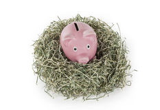 Old Piggy Bank in Shredded Dollar Nest royalty free stock photography