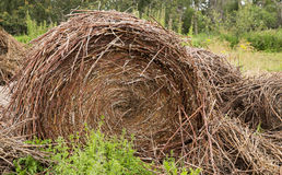 Old pile of straw or hay Stock Photo