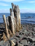Old Piles. Remnants of the old wooden wharf on Bell Island, Newfoundland, Canada. Once largest iron ore mine in North America royalty free stock photography