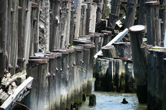Old Pilings Royalty Free Stock Photography